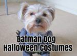Batman Dog Halloween Costumes